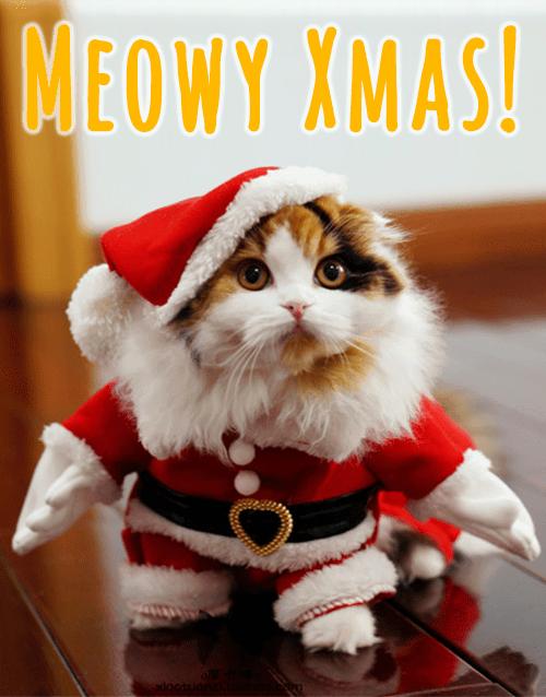 Mačka Christmas-Santa-Cat-Costume-1