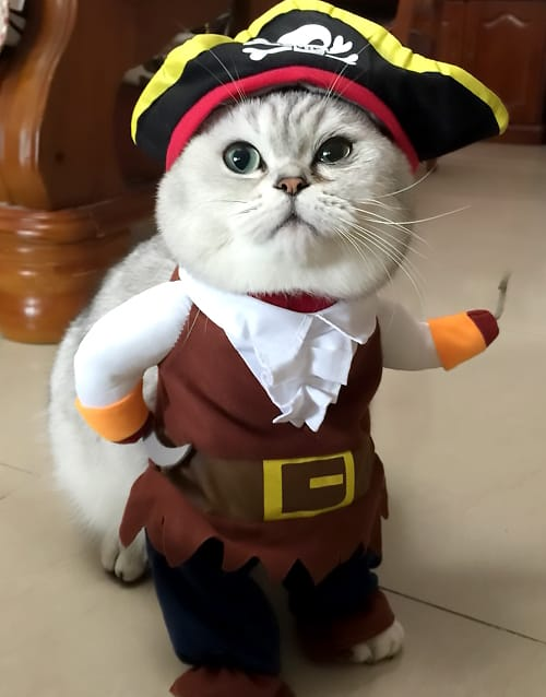 cb00440f040 Cat Pirate Costume