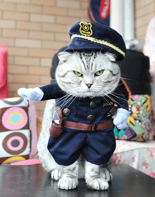 Pusheen Halloween Costume